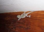 La Gomera 2008 029