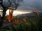 La Palma 2009 028
