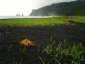 Island 2008 Sommer 001