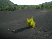 La Palma 2009 001
