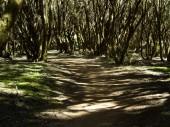 La Gomera 2008 009